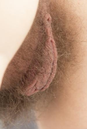 Hairy Cameltoe Porn